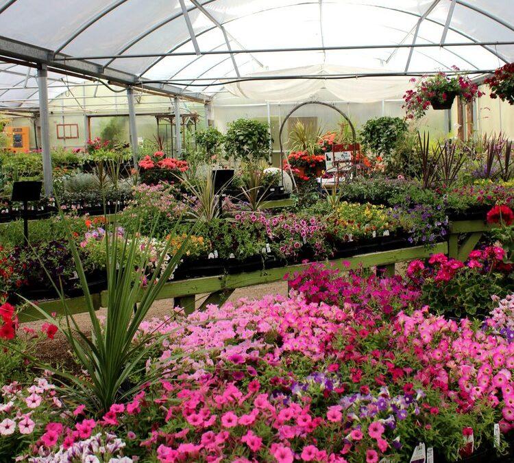 organic nursery in Boise