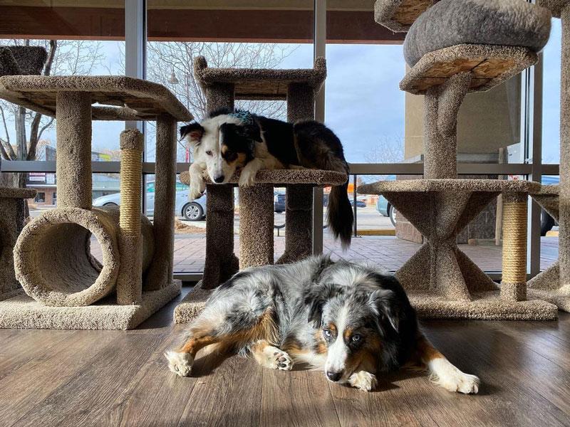 Best pet store in Boise barkNpurr